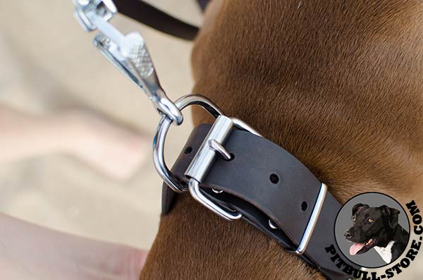 Topnotch Pitbull collar with nickel plated hardware