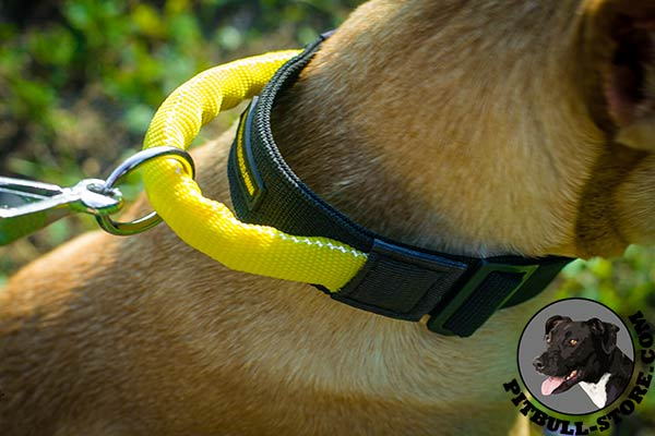 Convenient handle on Pitbull dog collar