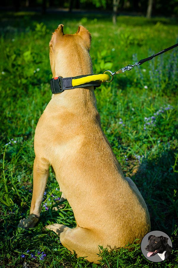 Nylon Pitbull dog collar for safe training