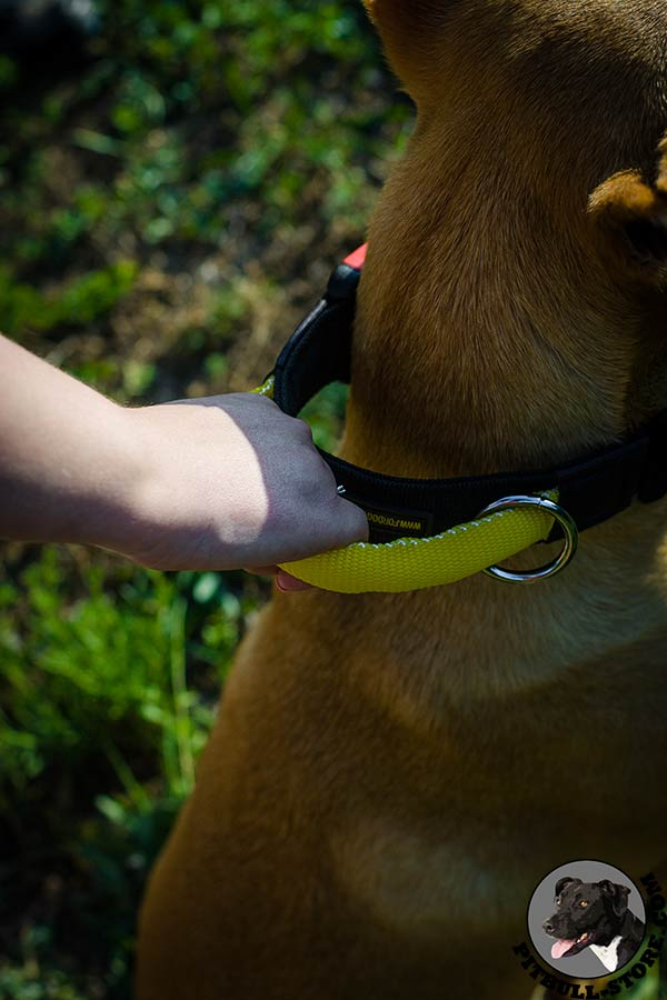 Nylon Pitbull dog collar with extra strong handle