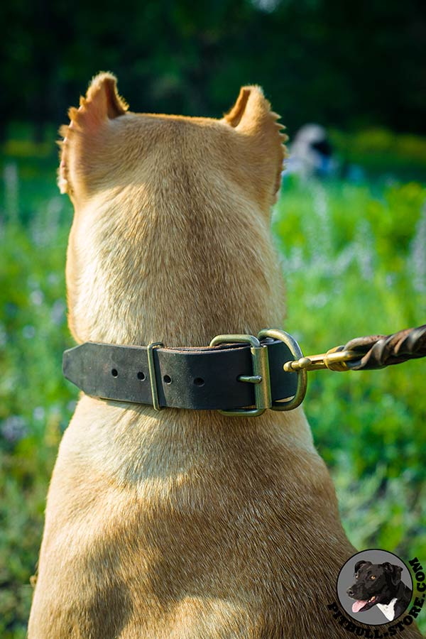 Genuine leather Pitbull collar with brass buckle and D-ring