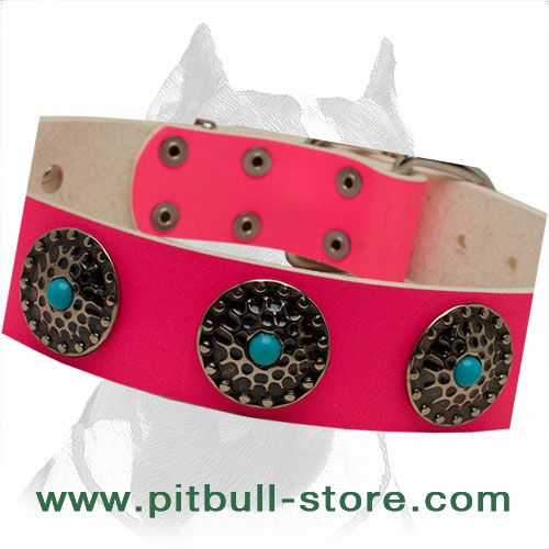 Leather collar for brigh walks with your Pitbull