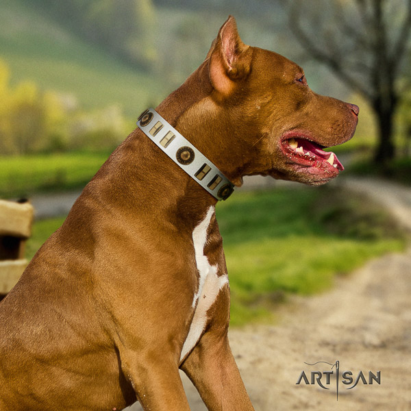 Pitbull unique decorated full grain genuine leather dog collar for everyday walking