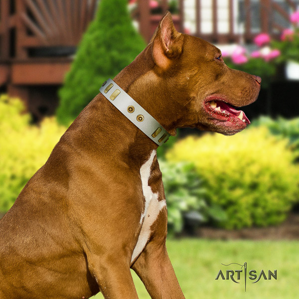Pitbull awesome studded full grain genuine leather dog collar for everyday walking