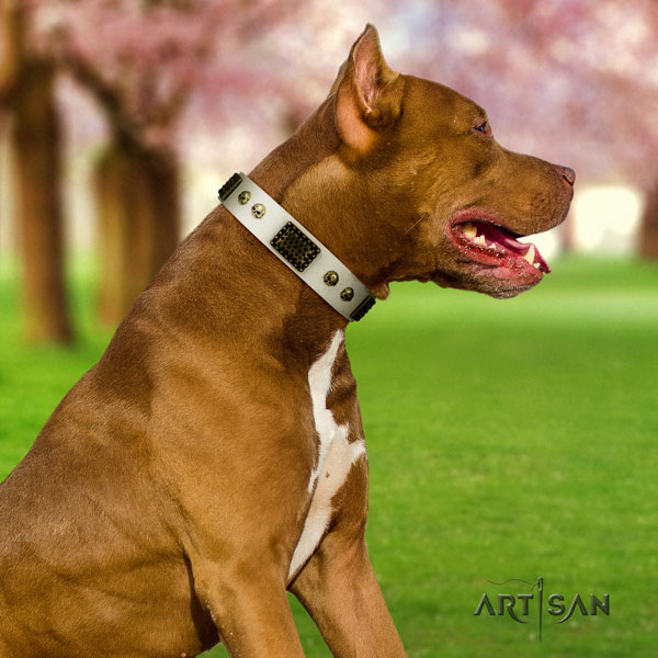 Pitbull comfortable full grain genuine leather dog collar with top notch adornments