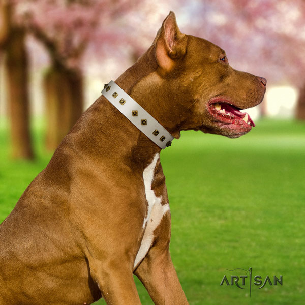 Pitbull easy adjustable full grain leather dog collar with stylish embellishments