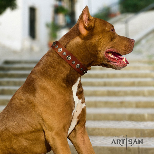 Pitbull easy to adjust leather dog collar with fashionable adornments