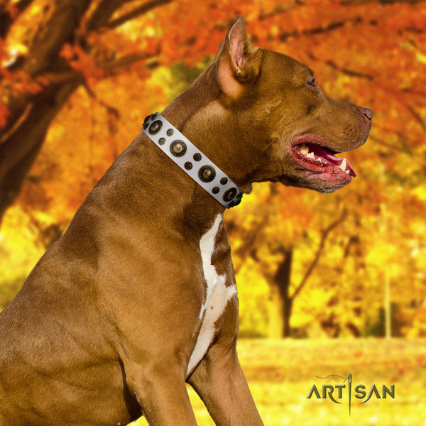 Pitbull stunning leather collar with embellishments for your canine