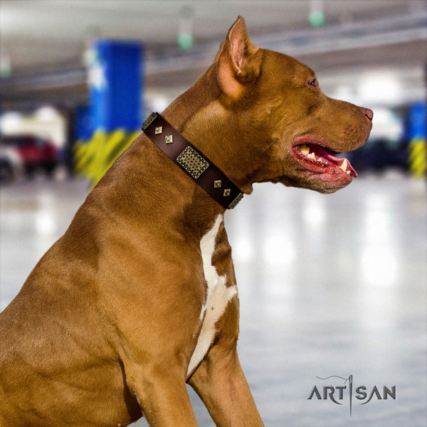 Pitbull easy wearing full grain natural leather dog collar with amazing decorations