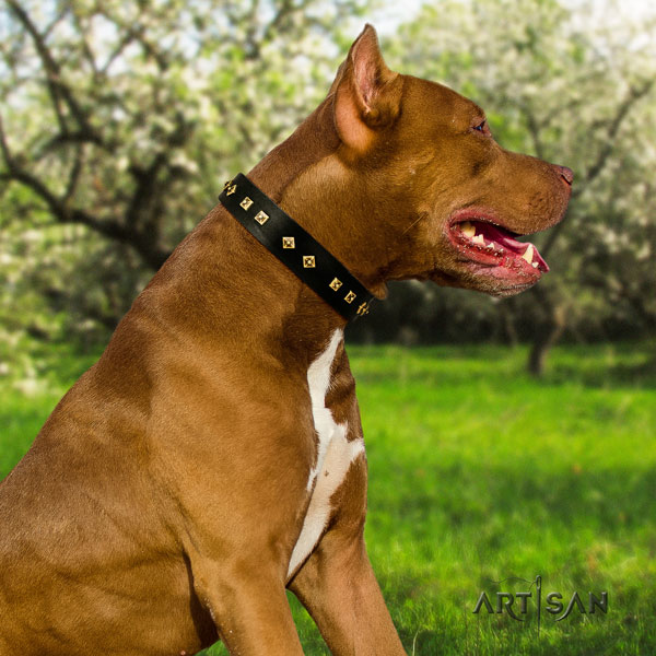 Pitbull comfortable full grain genuine leather collar with embellishments for your doggie