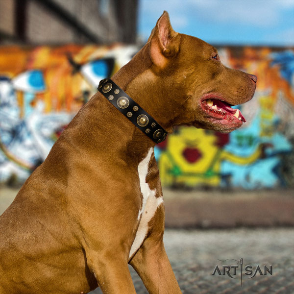 Pitbull remarkable full grain genuine leather collar with studs for your pet