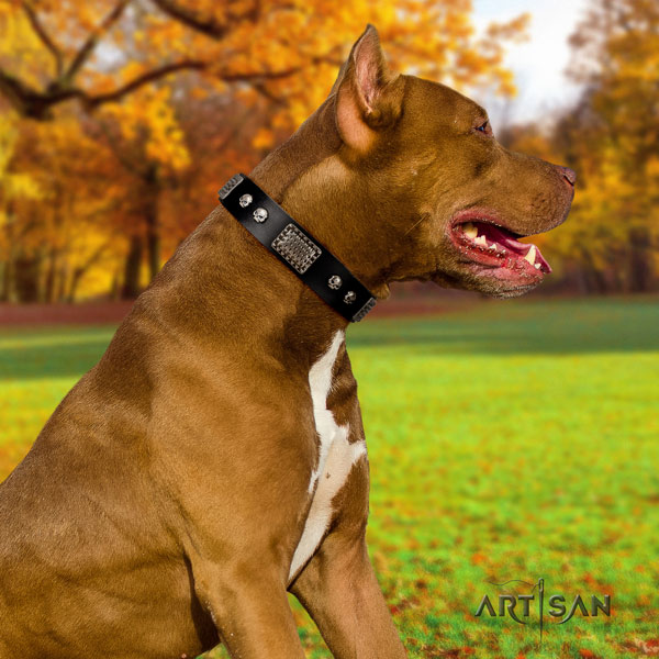 Pitbull convenient natural genuine leather dog collar with designer studs