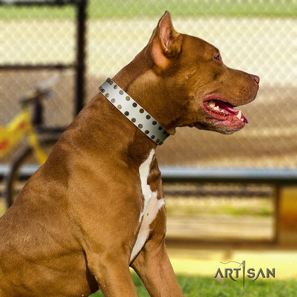 Pitbull inimitable embellished full grain leather dog collar for comfy wearing