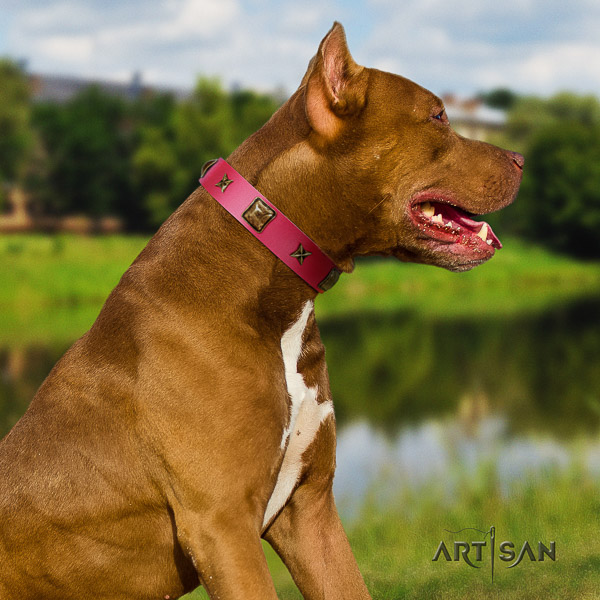 Pitbull impressive embellished genuine leather dog collar for daily walking