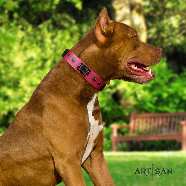 Pitbull perfect fit full grain leather dog collar with stylish adornments