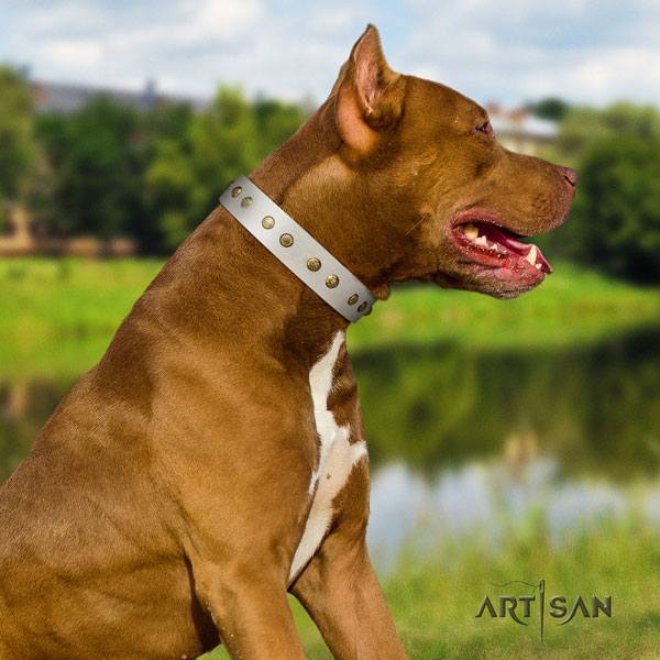 Pitbull perfect fit leather collar with embellishments for your four-legged friend