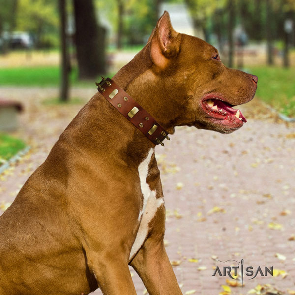 Pitbull easy wearing full grain genuine leather collar with decorations for your doggie