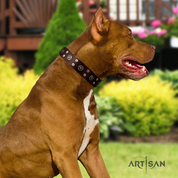 Pitbull adjustable genuine leather collar with embellishments for your canine