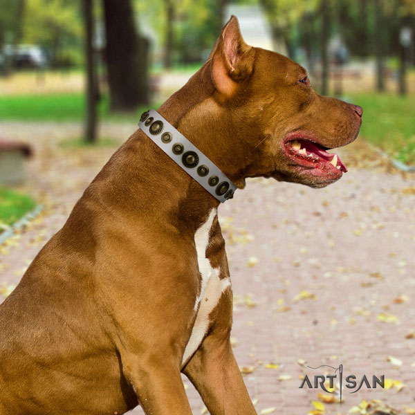 Pitbull unusual full grain leather collar with adornments for your doggie