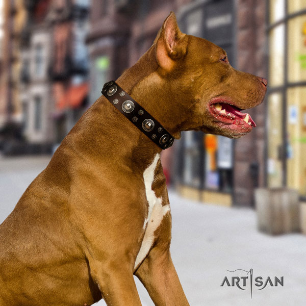 Pitbull handmade full grain leather collar with decorations for your four-legged friend