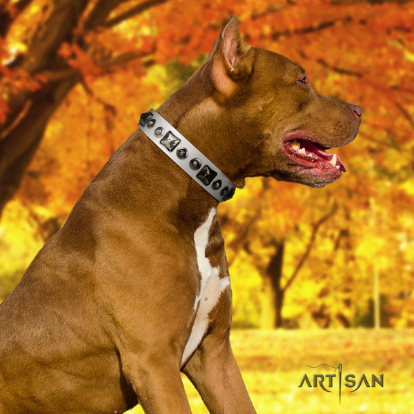 Pitbull trendy full grain natural leather collar with decorations for your four-legged friend