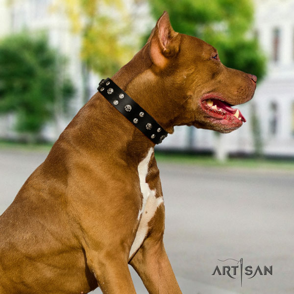 Pitbull trendy full grain leather collar with studs for your canine