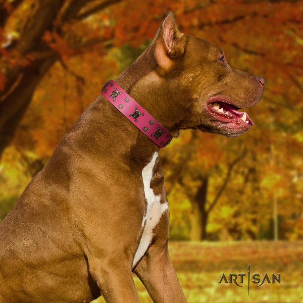 Pitbull significant adorned natural leather dog collar for stylish walking