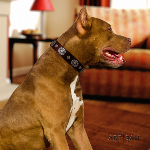 Pitbull convenient full grain genuine leather collar with embellishments for your canine