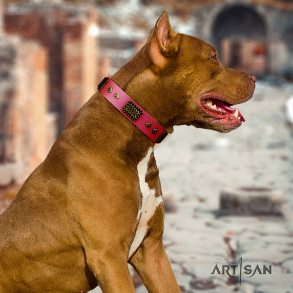 Pitbull fine quality full grain genuine leather dog collar with amazing adornments
