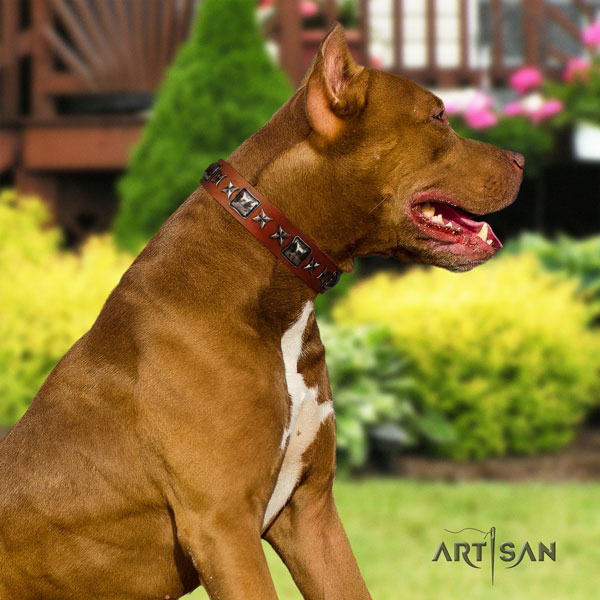 Pitbull amazing full grain genuine leather collar with embellishments for your dog