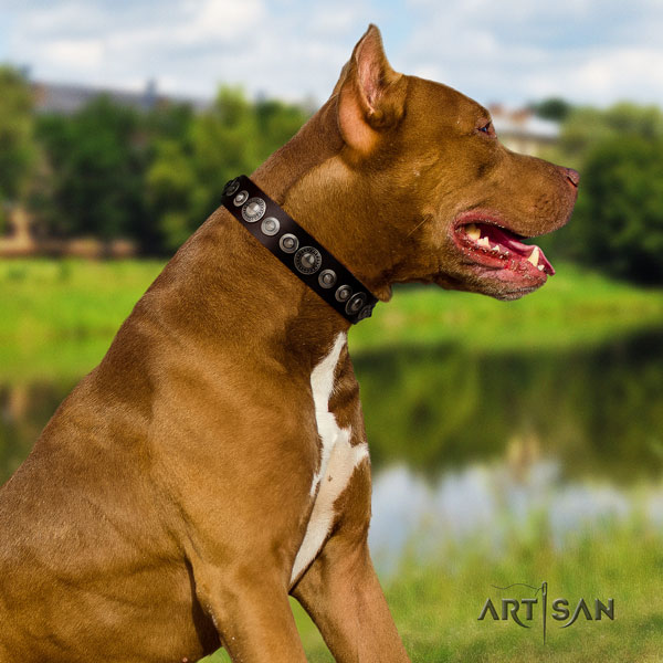 Pitbull adjustable full grain genuine leather collar with adornments for your four-legged friend