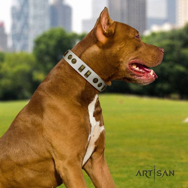 Pitbull top quality full grain natural leather dog collar with unusual studs