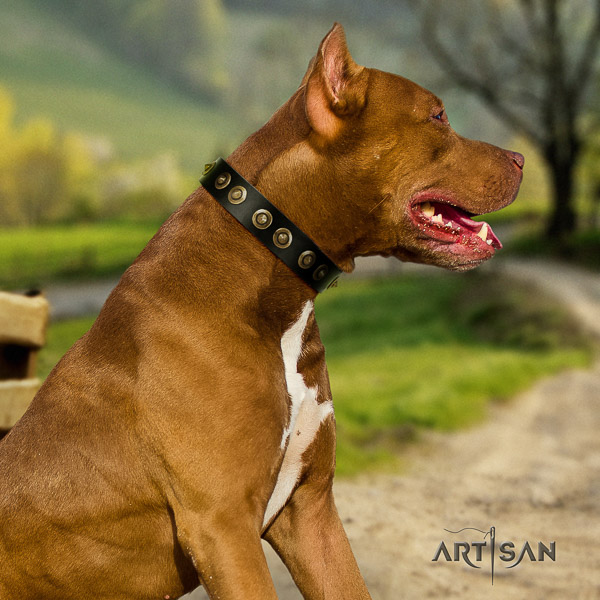 Pitbull designer decorated full grain leather dog collar for everyday walking