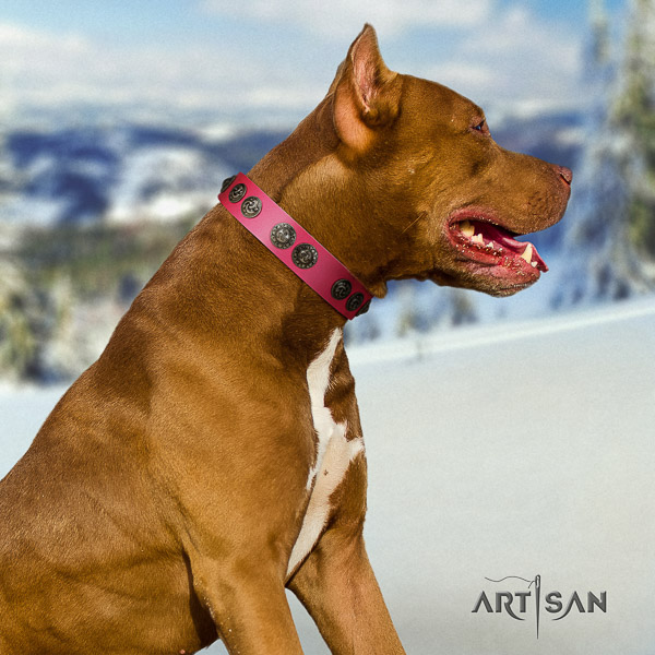 Pitbull impressive decorated natural leather dog collar for handy use