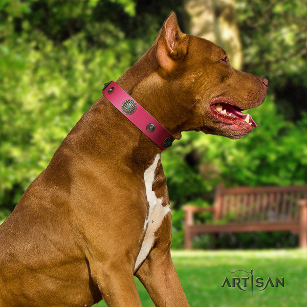 Pitbull top notch decorated genuine leather dog collar for everyday walking