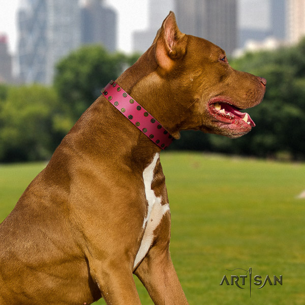 Pitbull exceptional decorated full grain leather dog collar for handy use