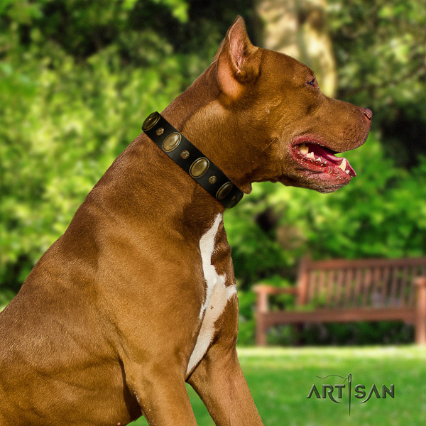 Pitbull significant embellished leather dog collar for comfortable wearing
