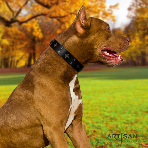 Pitbull inimitable adorned natural leather dog collar for comfortable wearing