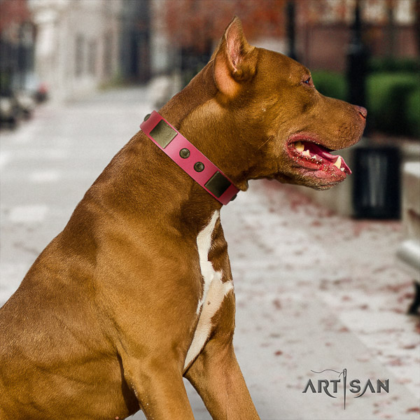 Pitbull unusual decorated natural leather dog collar for handy use