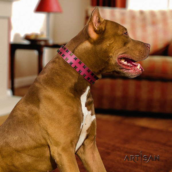 Pitbull remarkable embellished full grain leather dog collar for daily use