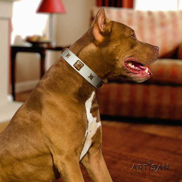 Pitbull extraordinary adorned full grain leather dog collar for walking