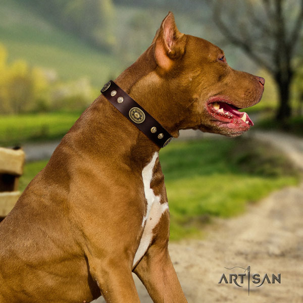 Pitbull comfortable full grain natural leather dog collar with designer adornments