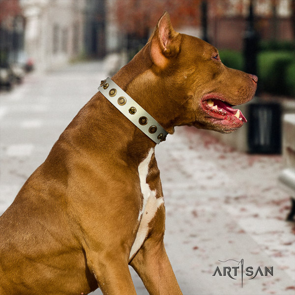 Pitbull incredible embellished full grain genuine leather dog collar for comfortable wearing