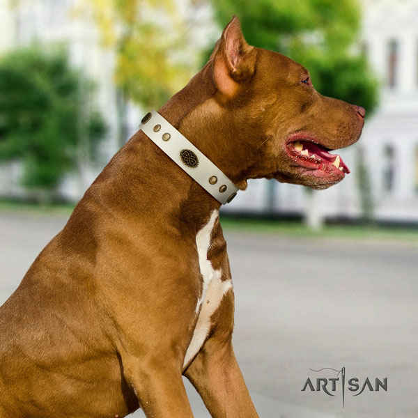 Pitbull adjustable full grain leather dog collar with incredible decorations