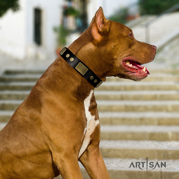 Pitbull easy wearing leather dog collar with stylish design adornments