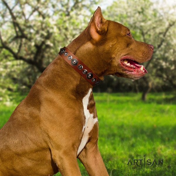 Pitbull exceptional natural genuine leather collar with embellishments for your four-legged friend