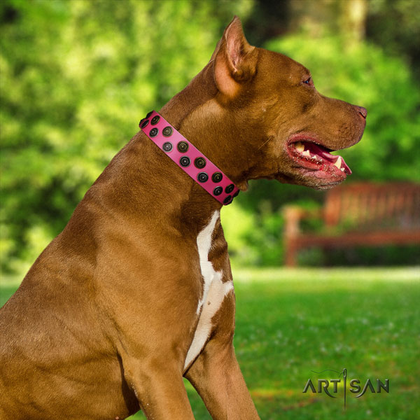 Pitbull handmade leather collar with adornments for your pet