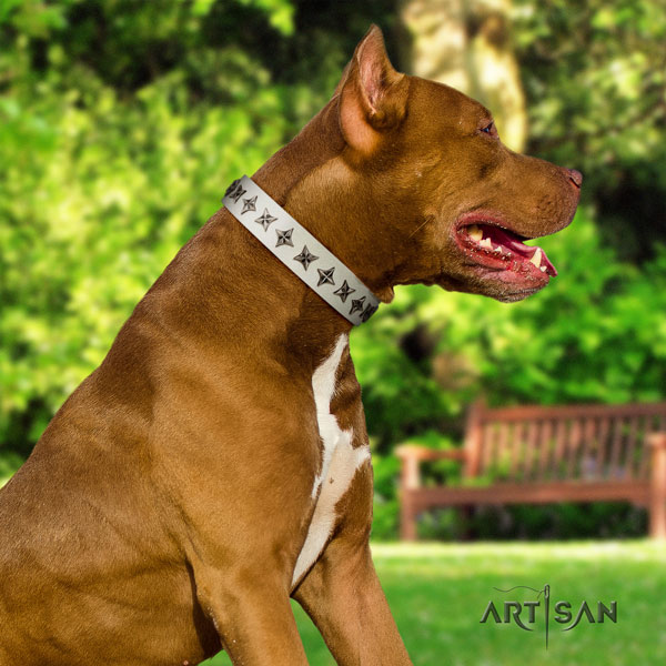 Pitbull best quality full grain genuine leather dog collar with extraordinary decorations