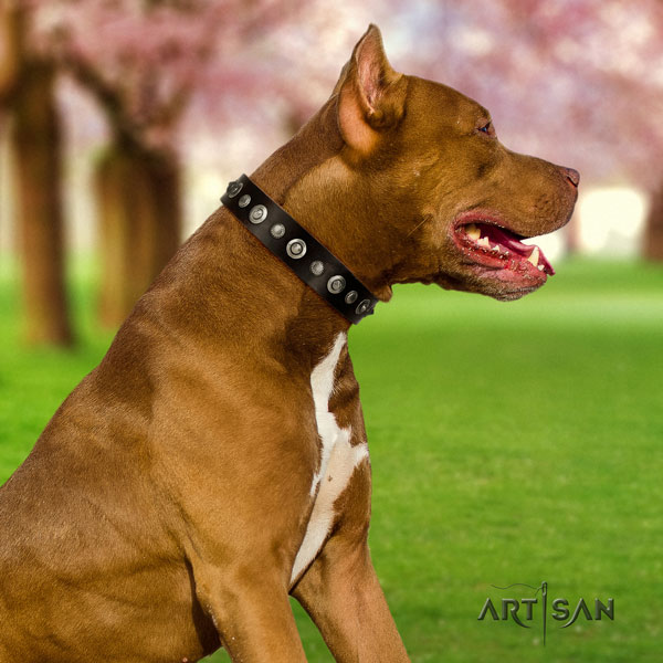 Pitbull top quality natural genuine leather dog collar with impressive studs