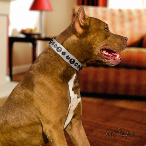 Pitbull extraordinary full grain genuine leather collar with decorations for your four-legged friend